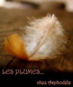 logo-plumes-aspho-4-c3a8me-tirc3a9-du-tumblr-vanishingintoclouds[1]